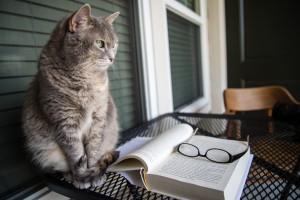 Thumbnail Lies ein Buch – oder viele